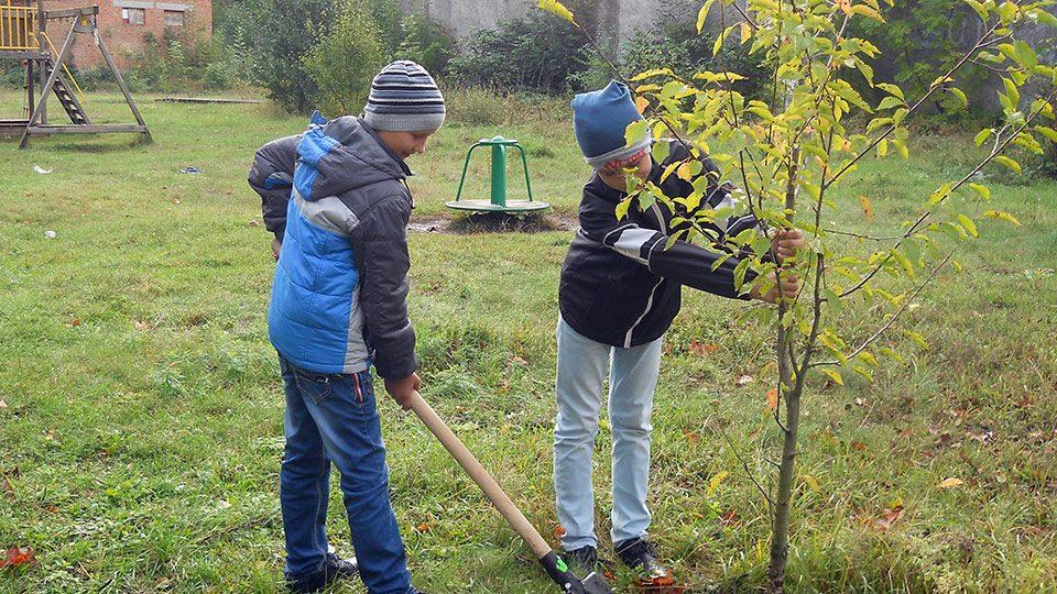 Посади дерево заради миру